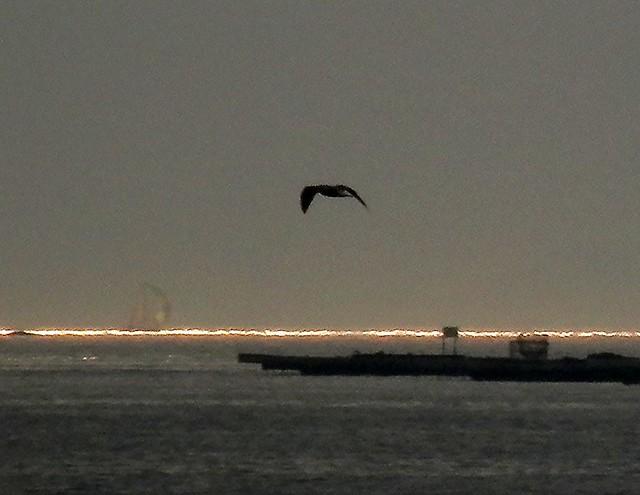 Ave de mar y lejano velero