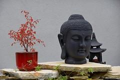 Cerisier japonnais dans jardin zen