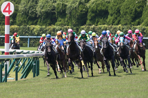 Kokura Racecourse 2015.8.1 (19) final corner at 6R MDN T2000