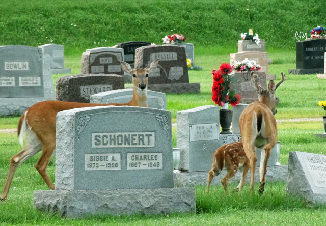 deer-onley-cemetery