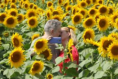 Love in the Sunflower Field