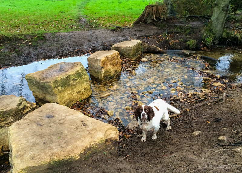 Improvements to the stream bed by the stepping stones