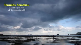 Living reefs of Terumbu Semakau with hard corals