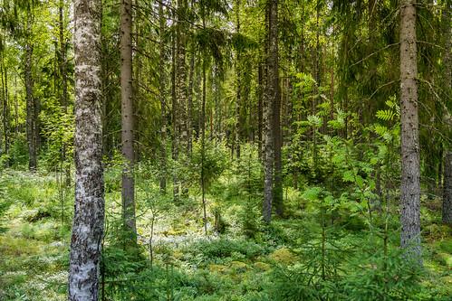 trees finland landscape arboles paisaje countries elements fi finlandia paises loimaa elementos finlandiadelsudoeste