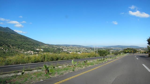 161029 1915 MX Chapala to Guadalajara, Highway 23, Ixtlahuacán de los Membrillos, the wild sunflowers were everywhere