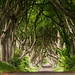 The Dark Hedges - Explored August 15, 2015 by A r i a n e .
