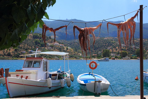 Drying Octopuses (Octopodes)