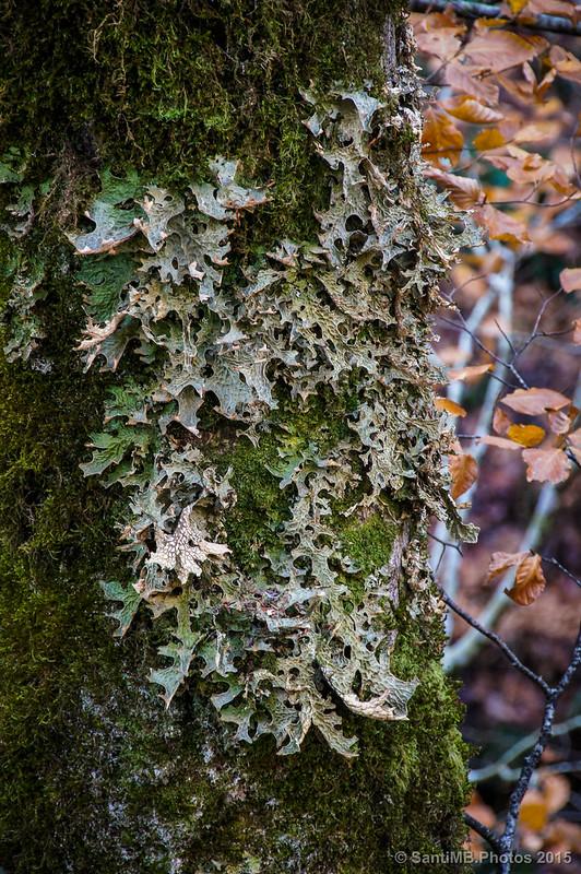 Falsas hojas