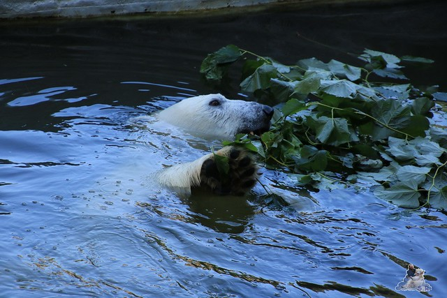 Tierpark Berlin 30.08.2015  071