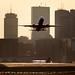 Boston Logan Airport by matt.hintsa