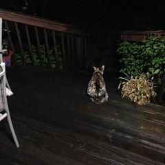Night stalker. :pouting_cat: