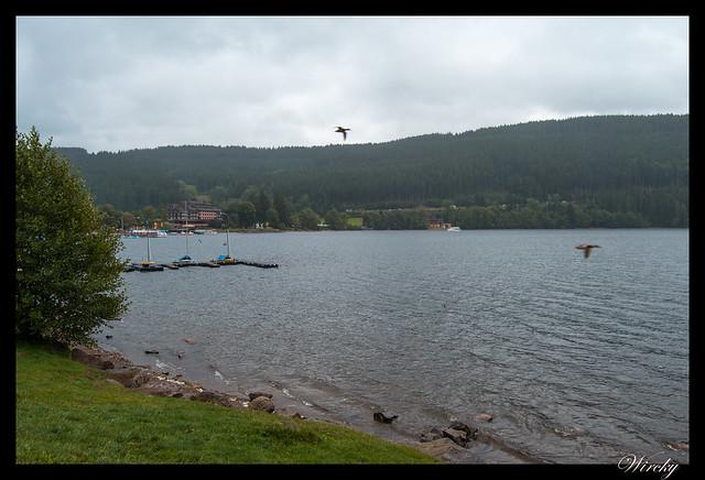 Selva Negra Donaueschingen Lago Titisee Rheinfall Schaffhausen - Lago Titisee