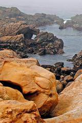Point Lobos Nature Reserve, CA