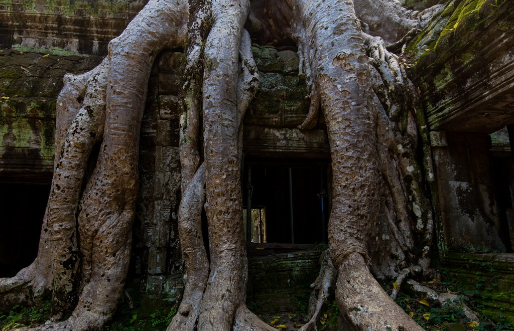 Ta Prohm Angkor-2765