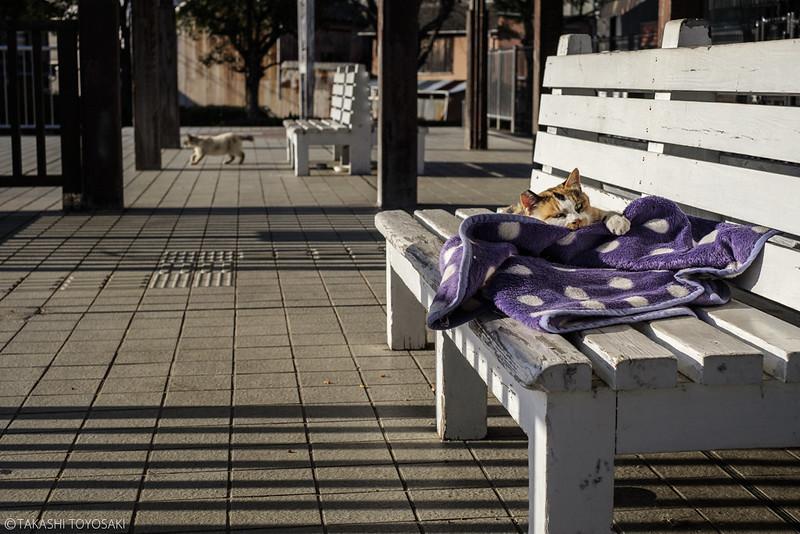 Tokushima Cat Color #241