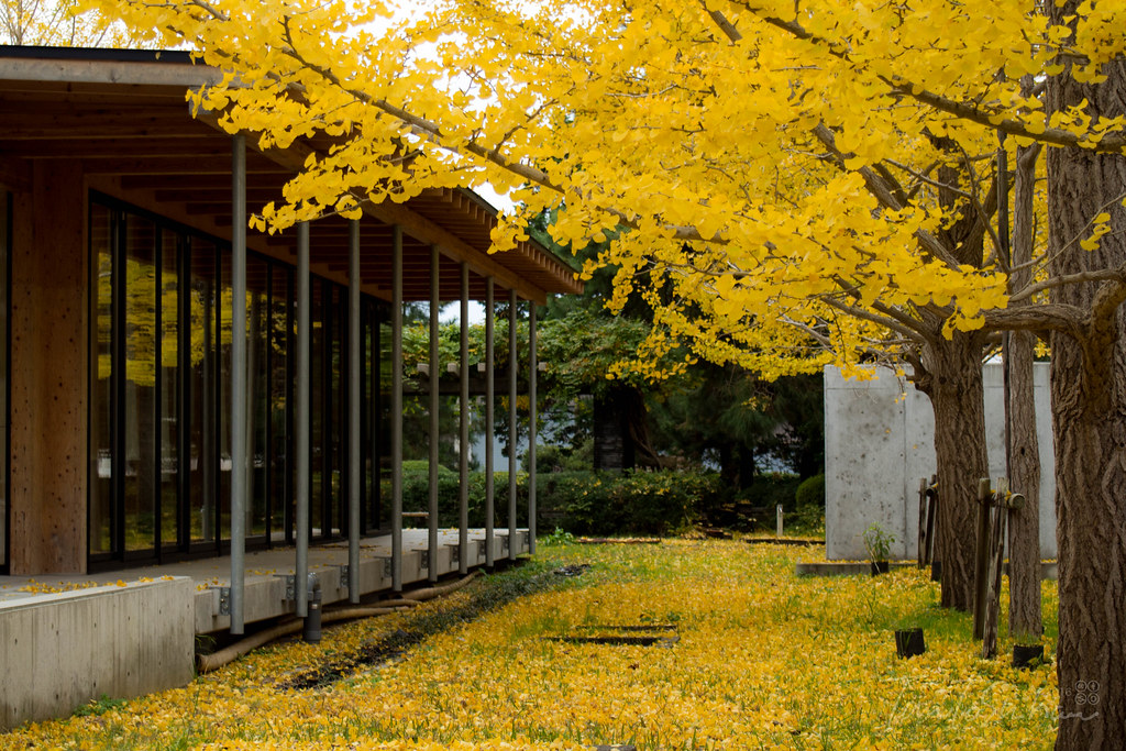 松江 島根大学 (matsue Shimane Univ.)