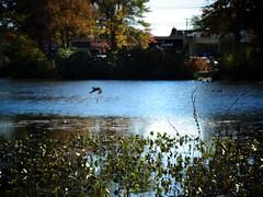 Mill Pond Park -- Autumn (53)