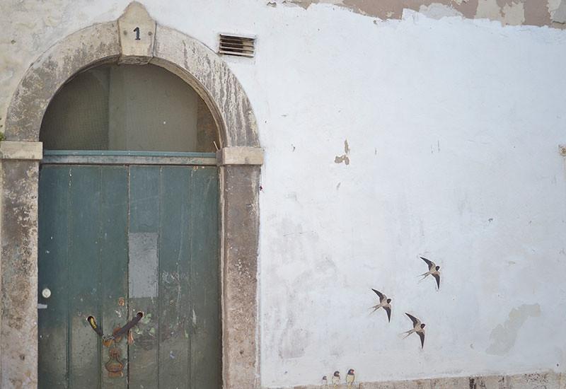Lisboa barrio alto. Golondrinas