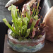 Die fleischfressende Pflanze ist Pflanze des Monats September 2015