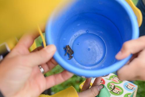 Upper Macatawa Trails: Frog catching