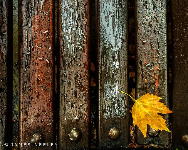 Leaf on a Wet Bench