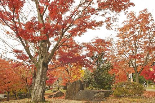 【写真】2014 紅葉 : 智積院/2020-09-07/IMGP7565