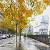 Paris in Autumn. #modernparis #fallcolors