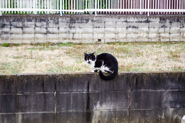Today's Cat@2015-10-06
