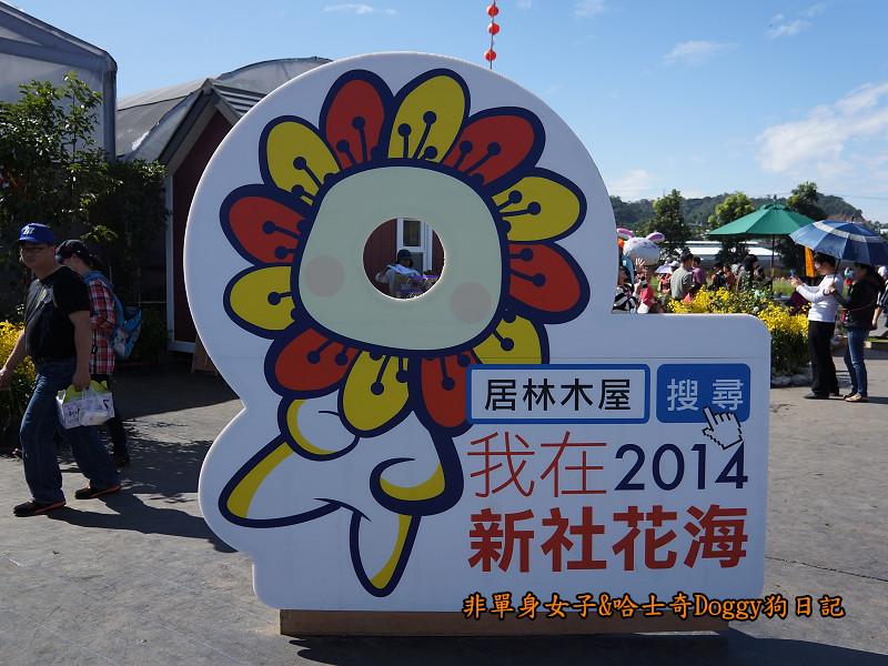 2014臺中新社花海13