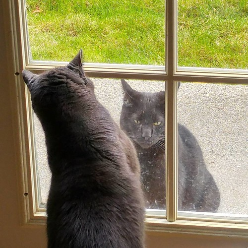 Neighborhood cat Janet, such an asshole.