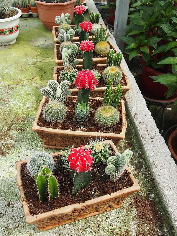 cactus point cameron, cactus garden, cactus vase
