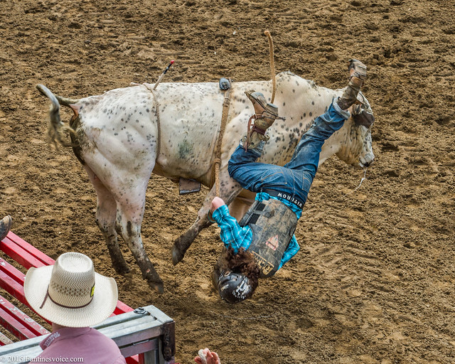 Davis Ranch 05.02.15-2