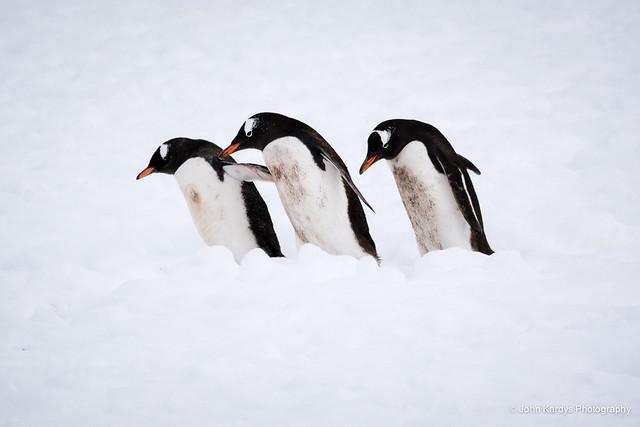 Antarctica 2015-484