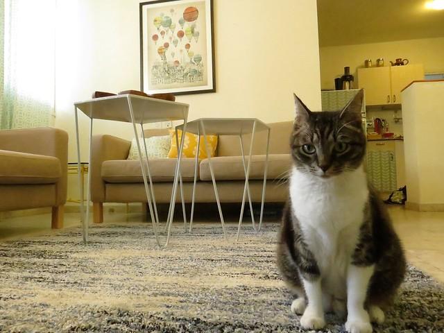 איתי וידין חתול