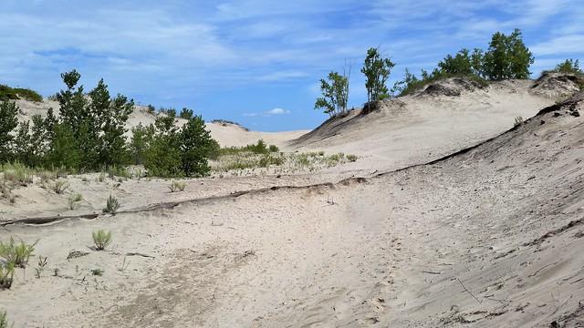 Les Dunes et La Végétation. 2016-08-17 12:07.49