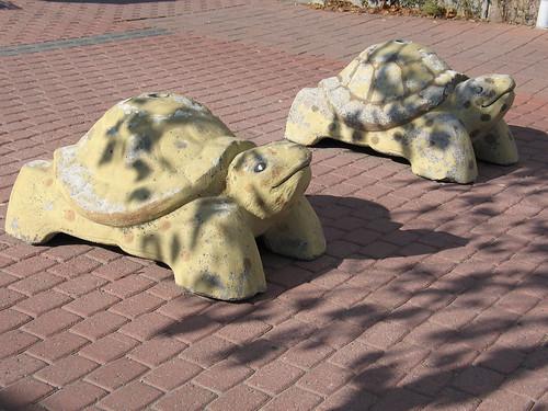 路障是可愛的烏龜