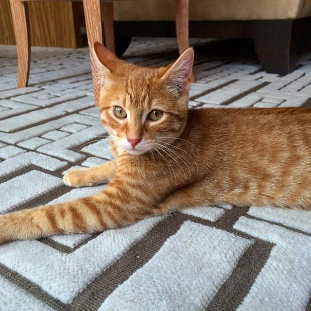Simba the kitten.