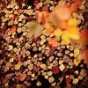 Chinese Tallow Trees @ Popcorn Trees | Autumn Season | Rawal Lake View Park | Islamabad, Pakistan | #AutumnLeaves #AutumnFoliage #eTribune @eTribune #Islamabad #TraveloguePakistan #Pakistan #ExpatInPakistan #Shaheen #DawnDotCom #BeautifulAutumn #Autumn201