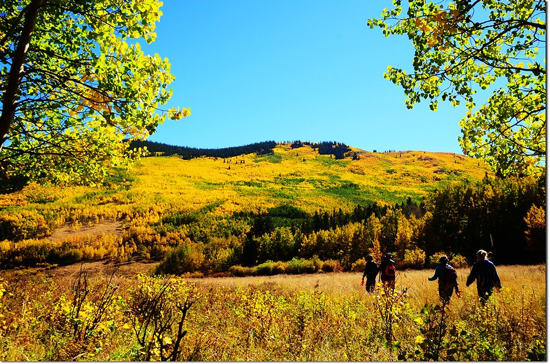 Fall colors at Kenosha Pass, Colorado (3)