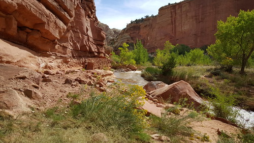 The life-giving Fremont River in Capitol Reef NP