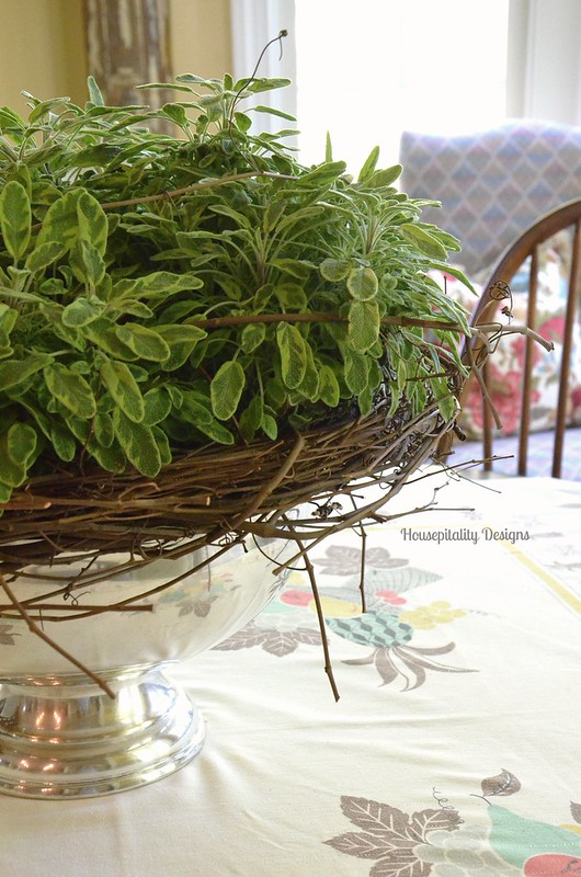 Ornamental Sage - Housepitality Designs