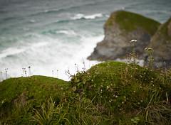 Bokeh again on the cliffs