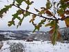 winter, aurouer