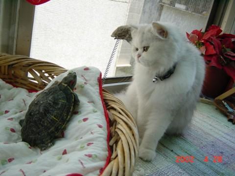 mifi 和班吉