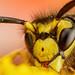 Baited Wasp III by Dalantech