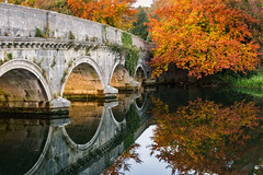 Beautiful reflections of the bridge and trees.