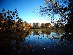 Mill Pond Park -- Autumn (72)