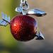 apple-shot  -  greetings from William Tell by karinrogmann
