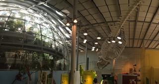Neighborhood Days - California Academy of Sciences Whale