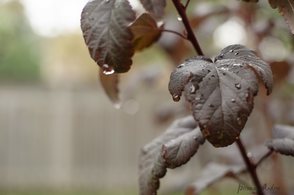 How to Photograph Fall |  Raindrops on Leaves